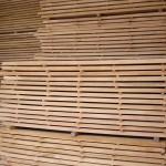 Beech timber 3