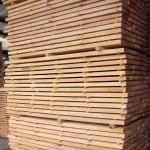 Beech wood 2