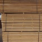 Beech wood 1