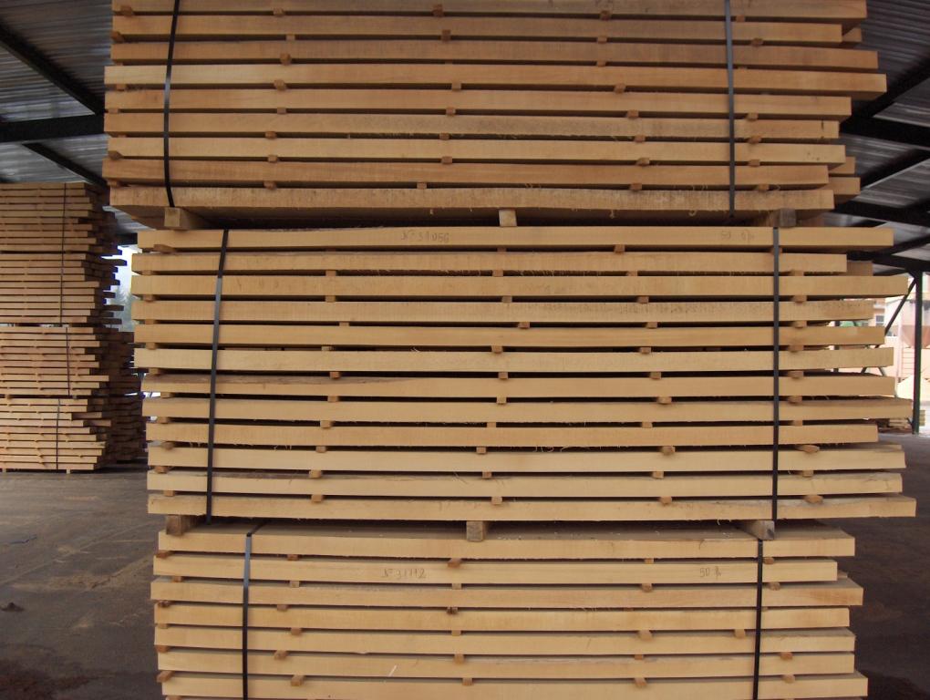 Beech timber beech wood for The beechwood