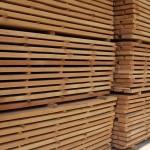 Beech timber 4