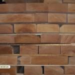 Beech wood 3